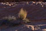 Desert Whisk