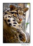 Wildlife 7