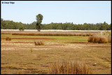 0006-dry reed beds