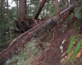 Trail near timberline
