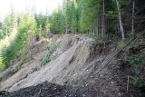 Packwood Lake Pipeline trail