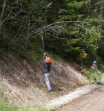 Goat Creek FS Rd 2750  Triming