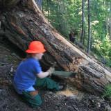 Sherri working on the first log