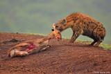 kenya_wild_life