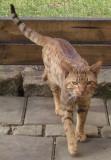 Katt Kompisar/ Cat friends
