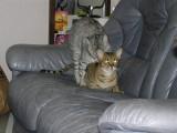 Kitten plans 2010