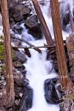 Water Rushing Through Cedars