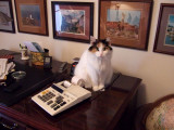 Office Assistant