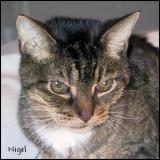 Nigel looking cranky