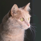 Truly-Shelter Cat 1