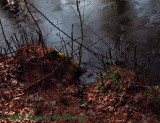 Ice patterns at stream edge