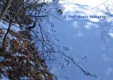Pond Edge Mink tracks