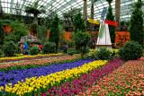 Tulips Show