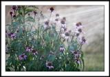july 31 flowers