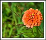 aug 19 orange