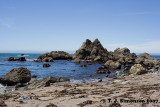 The Pacific Coast of California