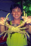 Tenggol Island - Coconut crab
