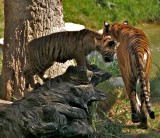 1 cub and mother