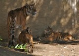 Mom with 2 of the cubs