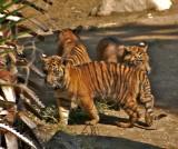 3 cubs together