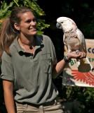 Moloccan Cockatoo