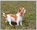 Beagles_MHF_D2X_1732_sm.jpg