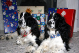 Benny and Walter are ready for Christmas...