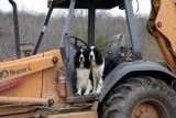 ready to drive the backhoe...