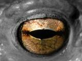 frogs eye.jpg