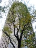 505 LaGuardia Place