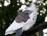 Pigeon at the Playground
