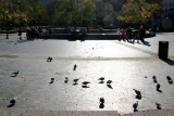 Fountain Plaza View - Pigeons in the Morning Sun