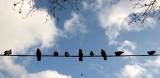 Ten Pigeons