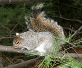 Squirrels - WSV Sasaki Garden