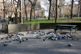 Pigeons at the Picnic Table