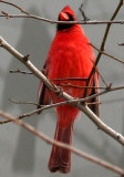 Cardinals - WSV Sasaki Garden
