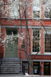 NYU School of Social Work & Flowering Pear Trees