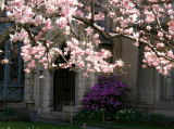 Parish House & Magnolia Blossoms