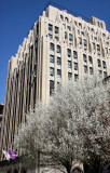 NYU General Facilities Building & Pear Tree Blossoms