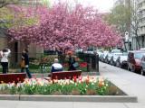 Street Garden Plants - NOHO Mercer Street