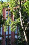 Black Locust Tree & NYU Library
