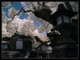 Kasugadaisha,Nara