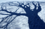 Trampled Tree Shadow