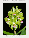 20074111 -  Cattleya granulosa 'Michael' AM/AOS (82pts)