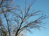 227-Dead Tamarisk Branches at Sunset.jpg