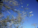 246-Tamarisk tree art by the men of the RR.jpg