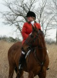 Hunting from Irish Fox Stables January 27th