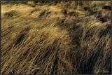 Spring Wind in the Grasses