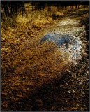 Puddle in the Path