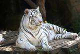 Audubon Zoo Swamp Festival 06